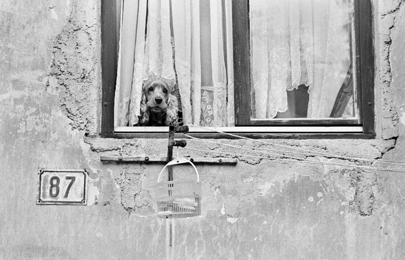 Images of Dubrovnik - Dog