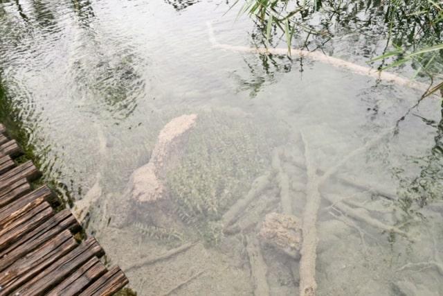 Plitvice Lakes Photos - Lake
