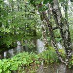 Plitvice Lakes Photos - Trees