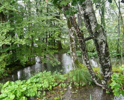 Plitvice Lakes Photos - Trees