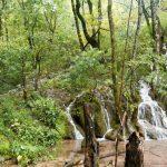Plitvice Lakes Photos - Flora