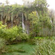 Plitvice Lakes Photos - Greenery