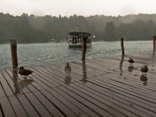 Plitvice Lakes Photos - Ducks