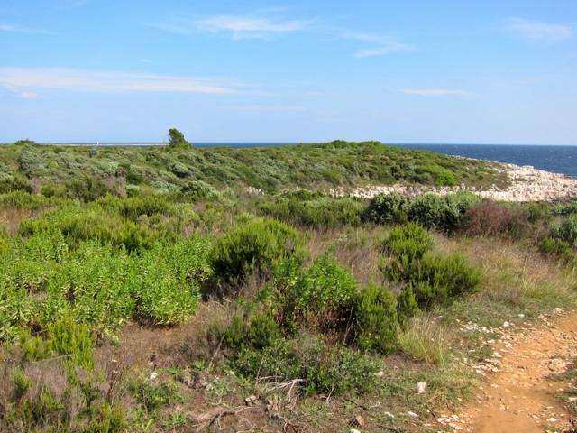 Cape Kamenjak greenery