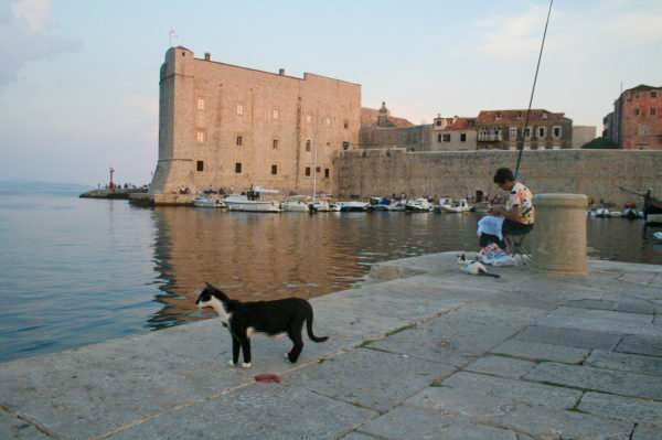 Dubrovnik Photos - Harbour cats