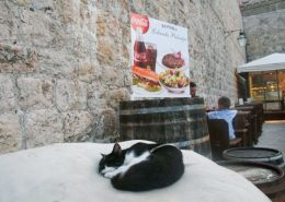 Dubrovnik Photos - Sleeping cat