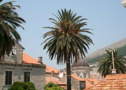 Dubrovnik Photos - Old Town Walls view