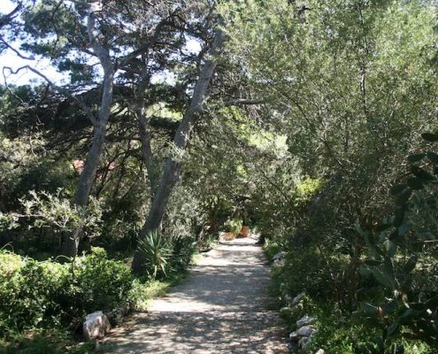 Photos of Hvar - Paths on Sveti Klement