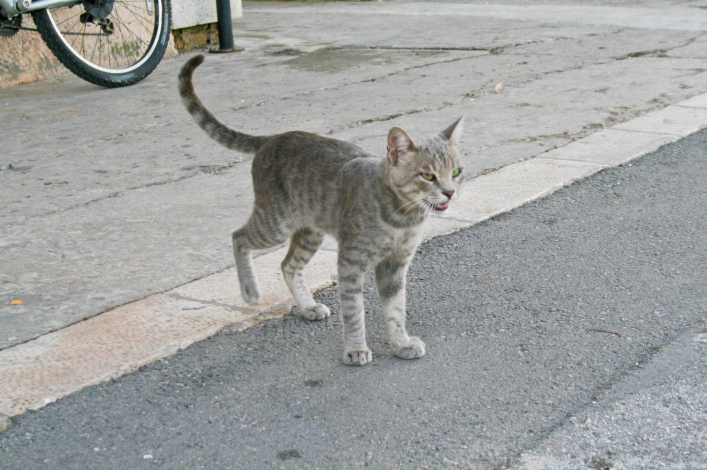 Photos of Vis - Cat