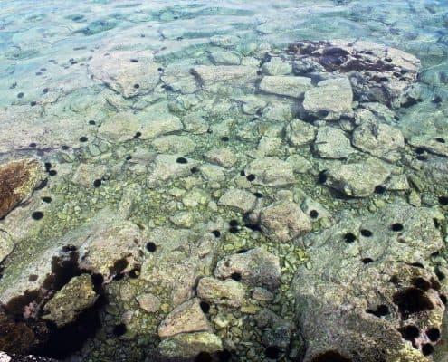 Photos of the Elafiti Islands - Sudurad on Sipan - Waterfront walk