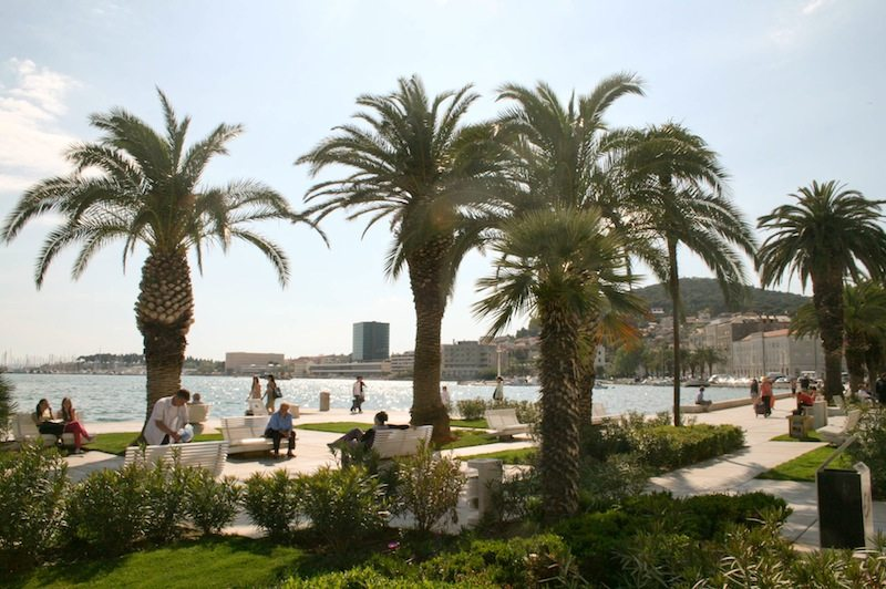 Photos of Split - Palm trees