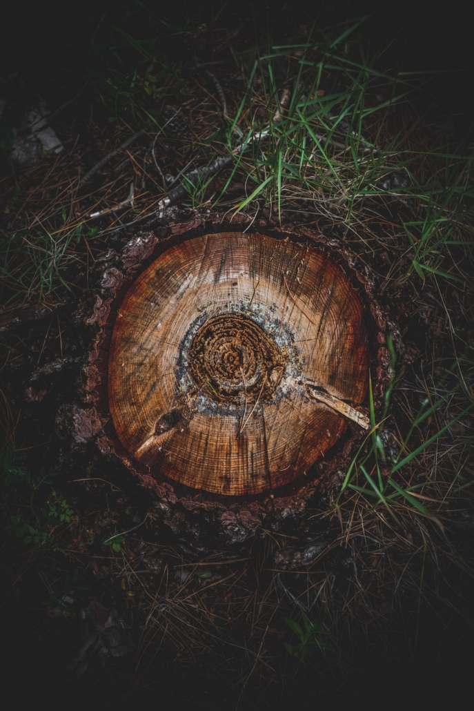 Photos of Makarska - Tree stump