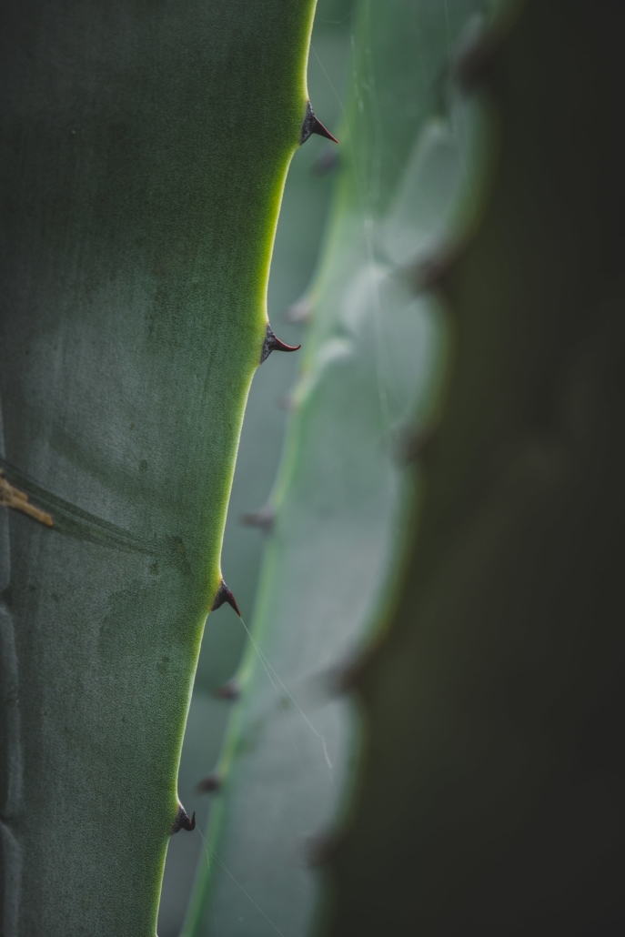 Photos of Makarska - Leaf close up