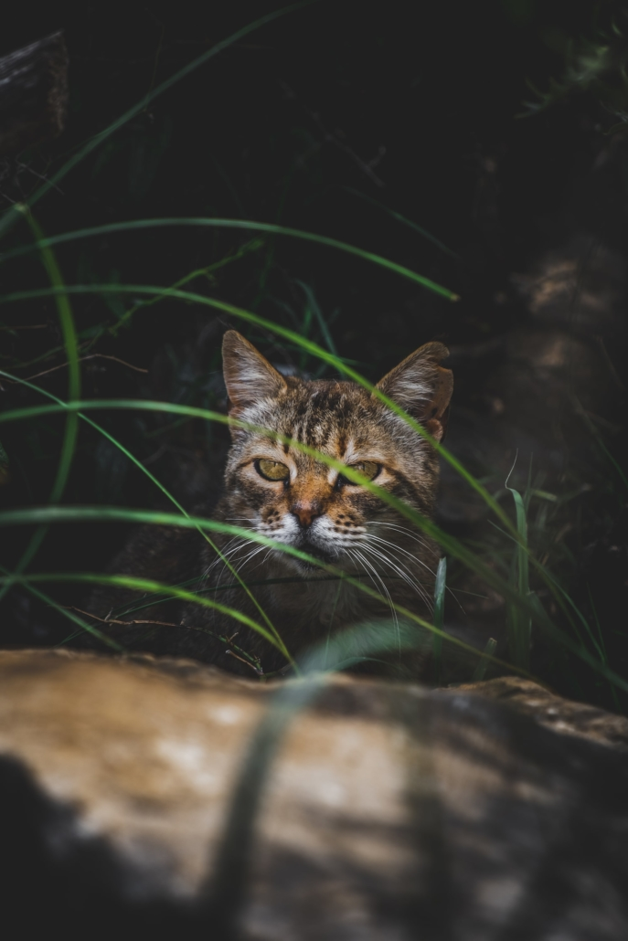 Photos of Makarska - Cat