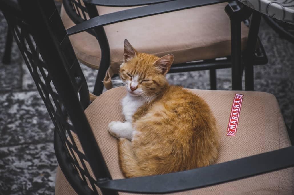 Photos of Makarska - Sleepy Cat