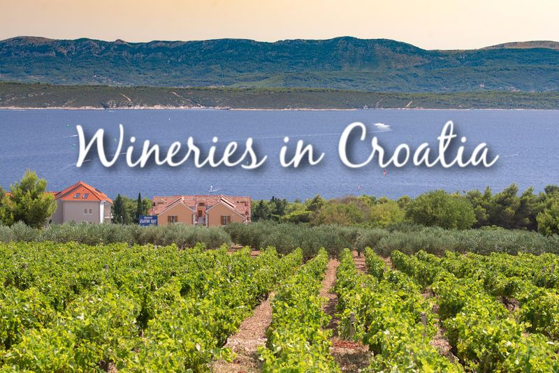 Wineries in Croatia