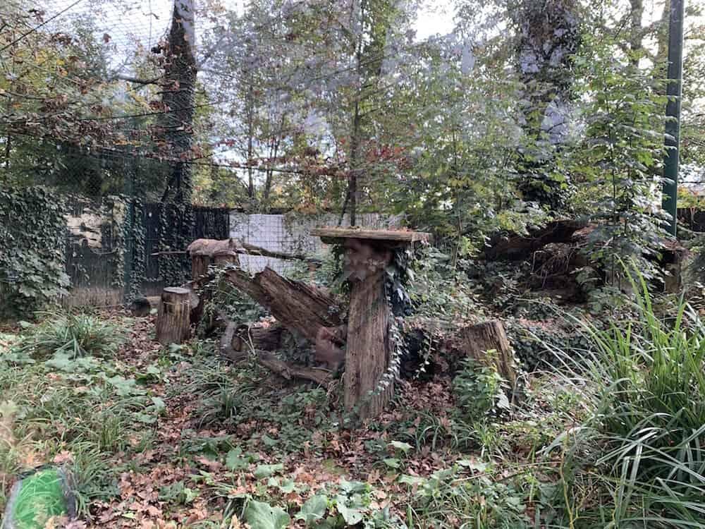 Zagreb Zoo - lynx