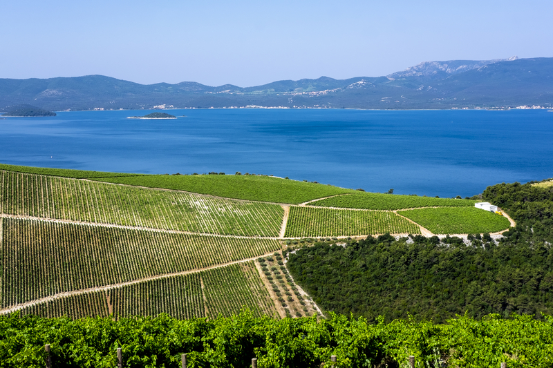 VIneyards on the Peljesac Peninsula