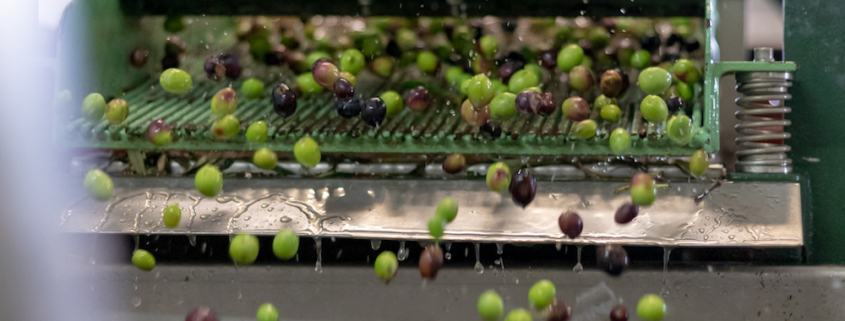 Baioco Olive Oil Production